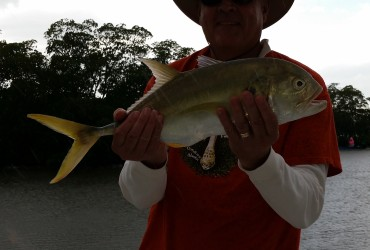 Jack crevalle fort myers