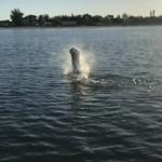 Fort Myers Tarpon Fishing